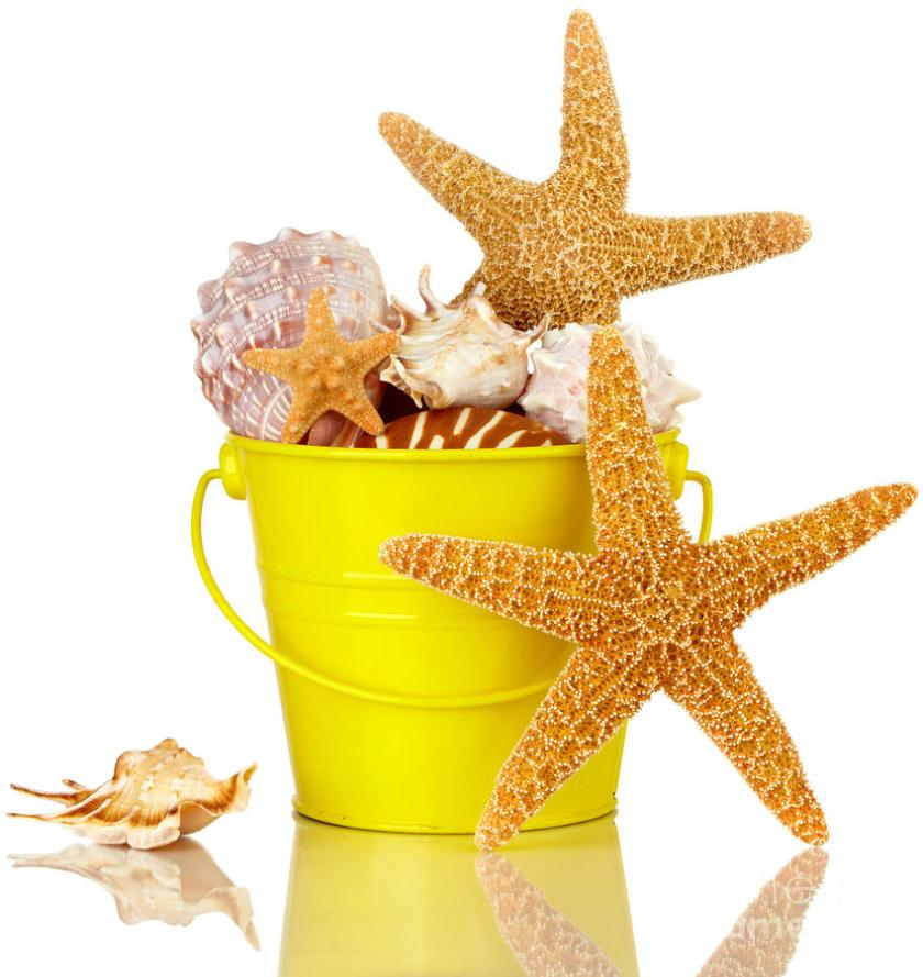 starfish-and-sea-shells-in-colorful-yellow-beach-bucket-isolated-susan-mckenzie (1)